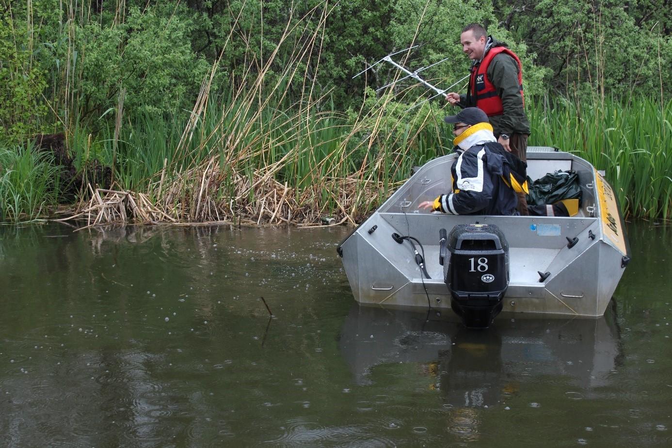 Denna bild är tagen sekunden efter att malen vältrade sig i ytan. Alldeles intill båten syns svallen efter fisken. Foto: Rickard Gustafsson.