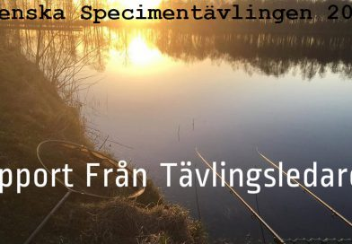 Sjunde Rapporten – Svenskan