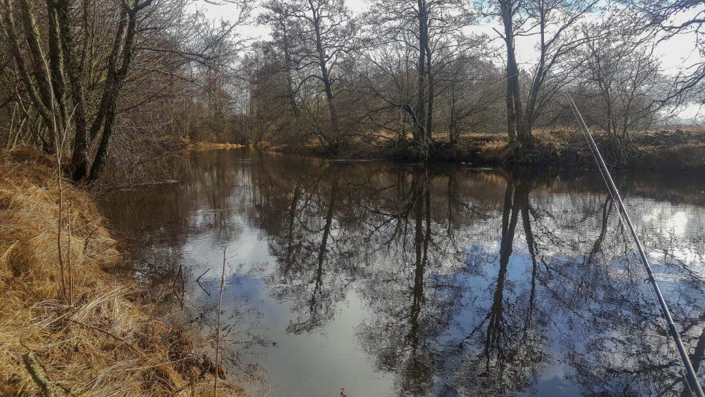 Uppdgra kallvattensfärna - Lillån