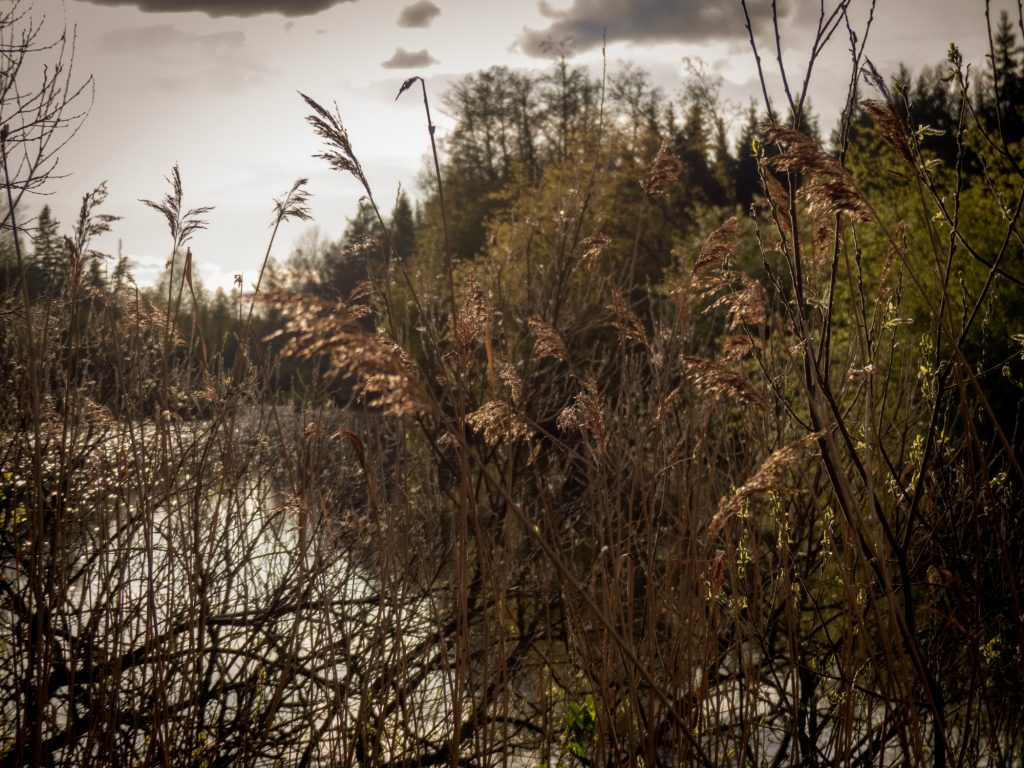 Fantastiska Emån gömmer sig bakom vasstrån och buskar