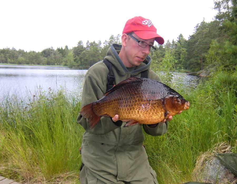 I fokus: Vicktor Hallensjö med sin ruda på 2880 gram som var Svenskt rekord tidigare.