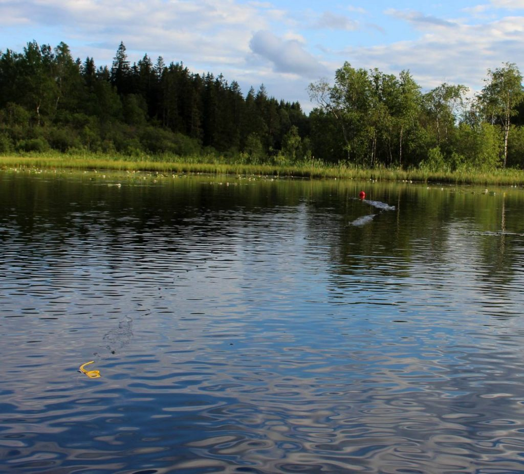 C-J Natur utför ett provfiske med hjälp av ett speciellt provfiskenät.