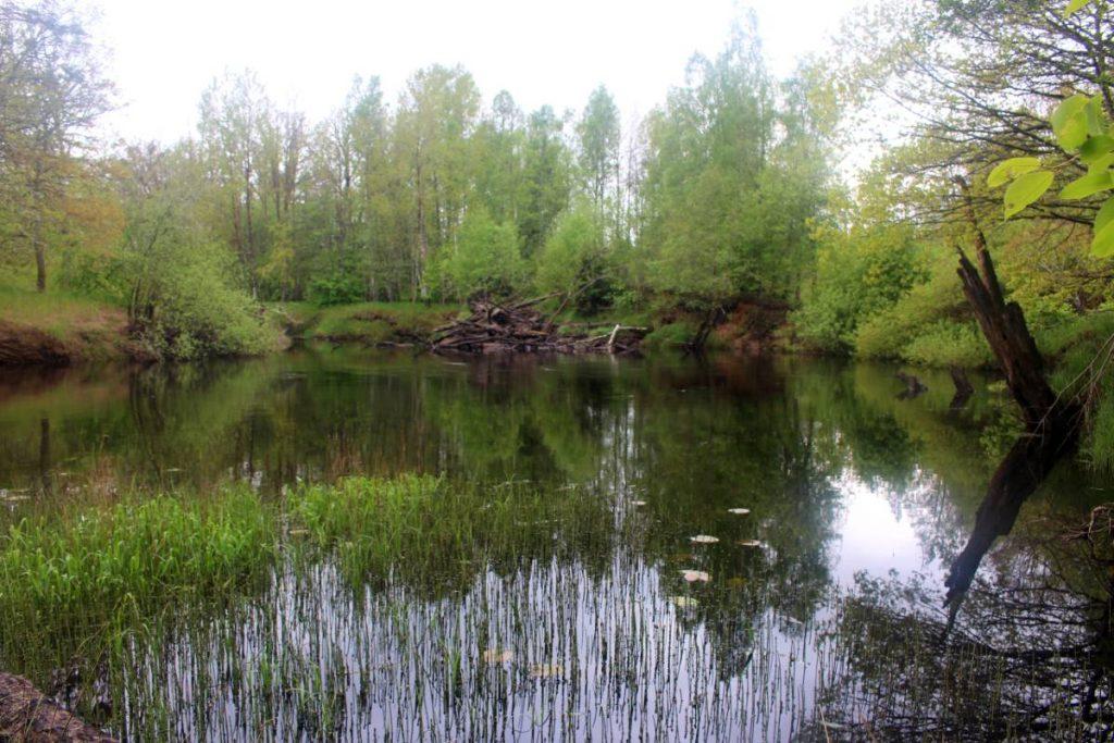Carl-Johan Månsson tro storfärnan står på denna platsen, vad tror du?