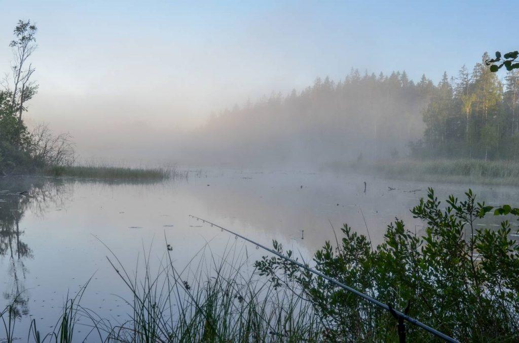 Flötmete efter sutare vid en liten skogssjö en härlig sommarmorgon.